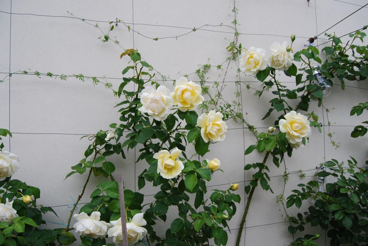 """""""Créme de la Créme (rose)""""ふたたび"""